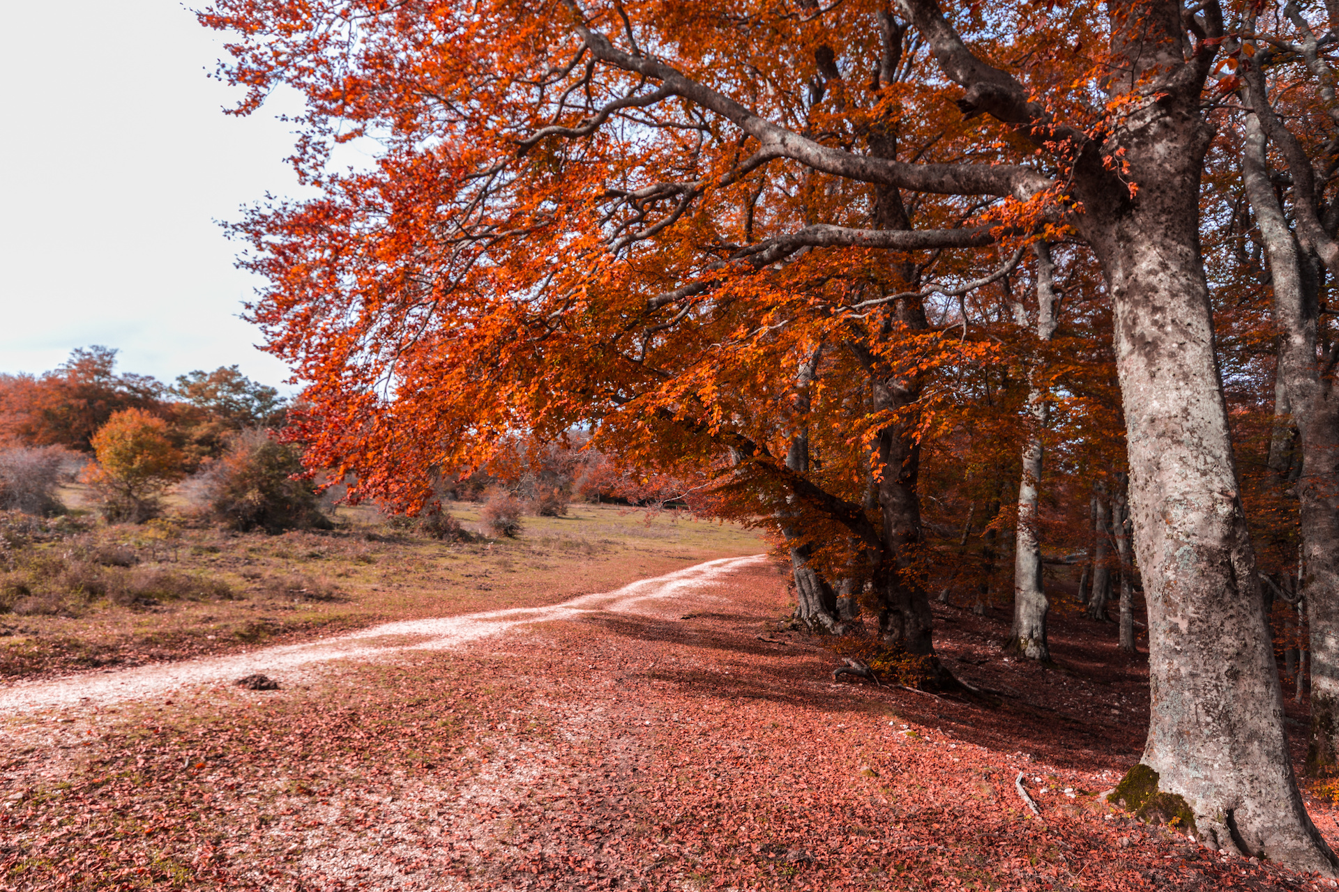 Fall foliage: in search of autumn leaves