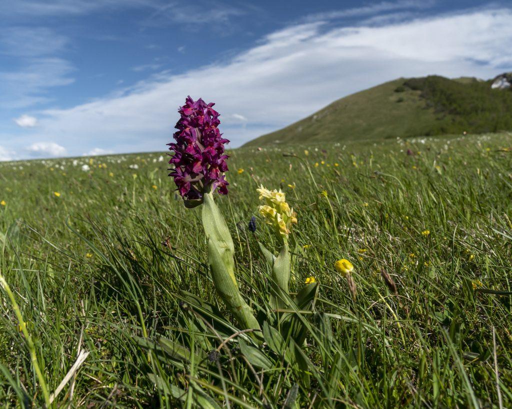 Piani di Ragnolo Orchidee3