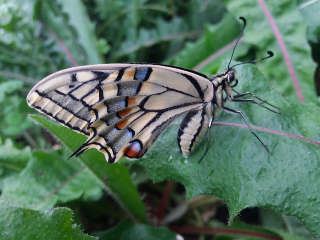 Giardino delle farfalle Cessapalombo2
