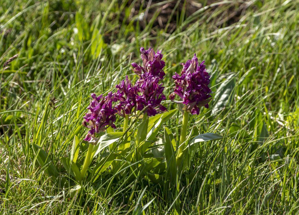 Piani di Ragnolo Orchidee