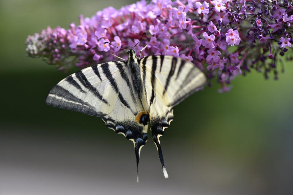 Giardino delle farfalle Cessapalombo