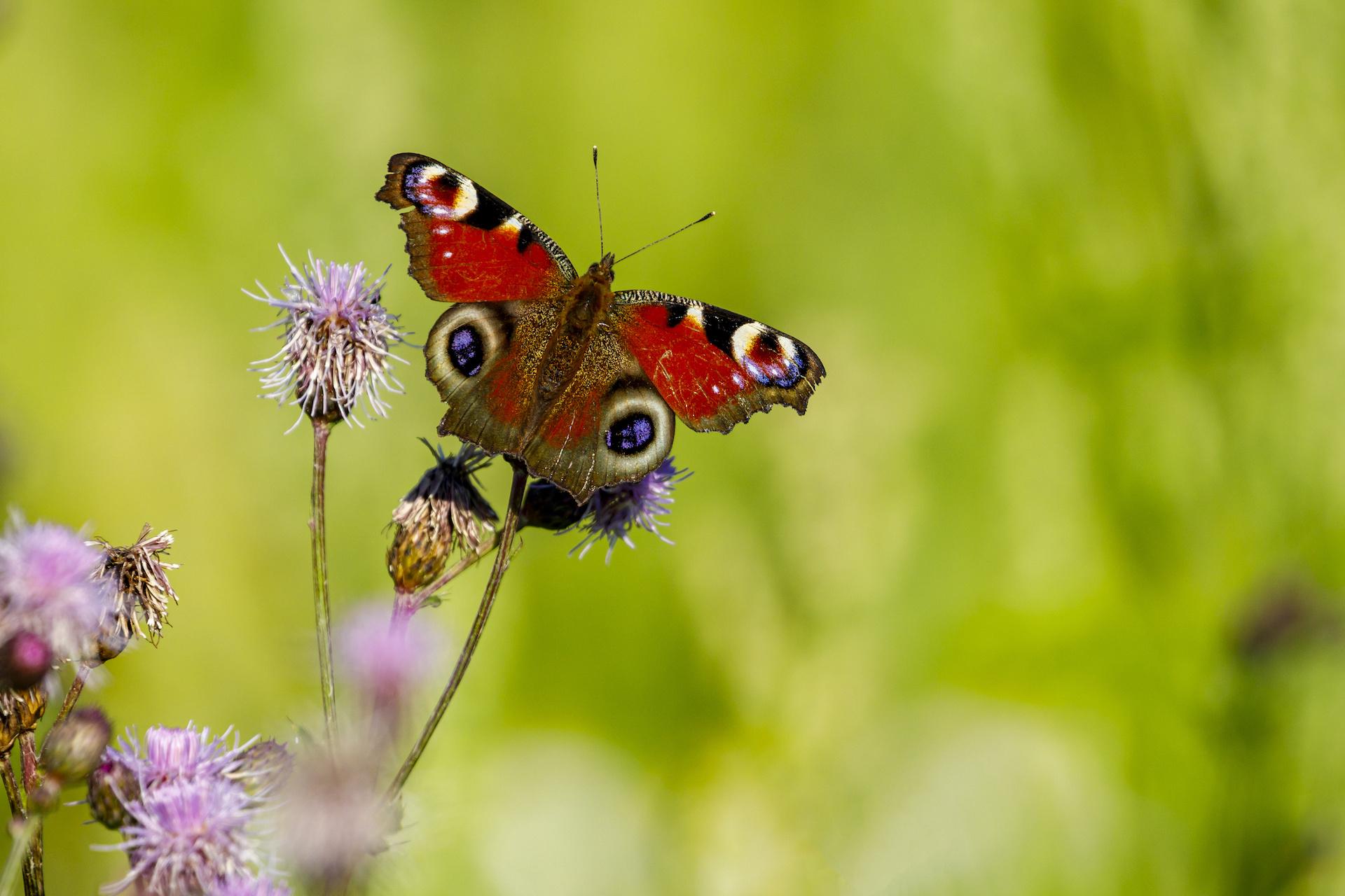 L'effetto farfalla nel giardino di Cessapalombo